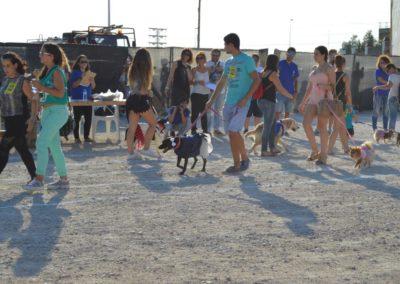 festival-canino-mascota-jardin-2016-124-1024x768