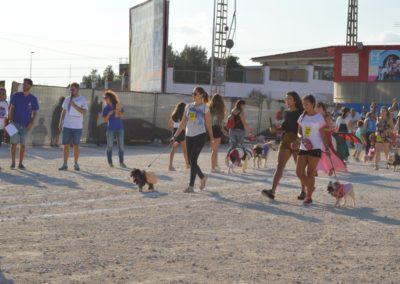 festival-canino-mascota-jardin-2016-126-1024x768