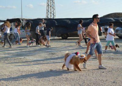festival-canino-mascota-jardin-2016-147-1024x768