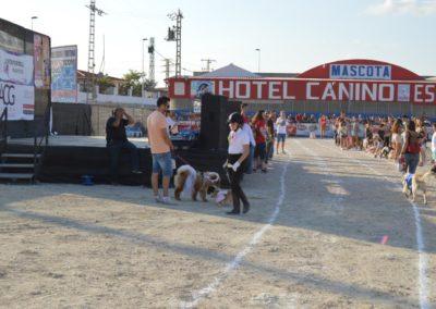 festival-canino-mascota-jardin-2016-248-1024x768