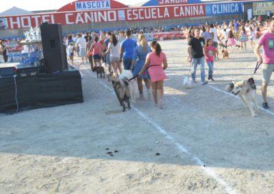 festival-canino-mascota-jardin-2016-273-1024x768