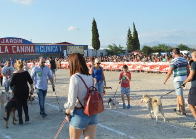 festival-canino-mascota-jardin-2016-280-1024x768