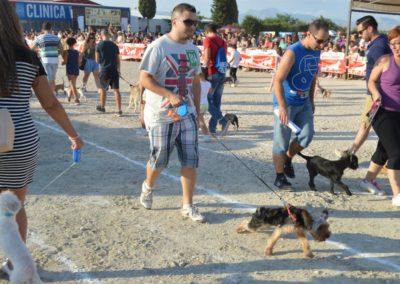 festival-canino-mascota-jardin-2016-282-1024x768