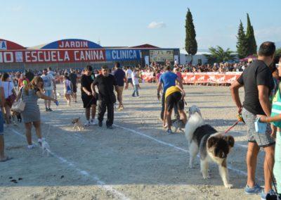 festival-canino-mascota-jardin-2016-285-1024x768