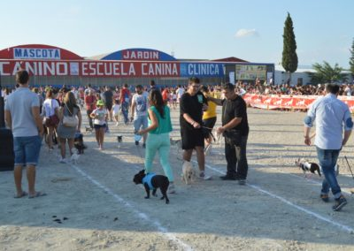 festival-canino-mascota-jardin-2016-286-1024x768