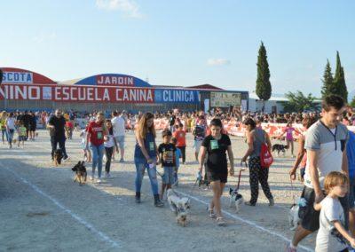 festival-canino-mascota-jardin-2016-296-1024x768