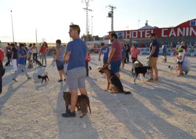 festival-canino-mascota-jardin-2016-308-1024x768