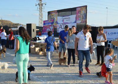 festival-canino-mascota-jardin-2016-337-1024x768