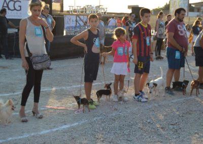 festival-canino-mascota-jardin-2016-476-1024x768
