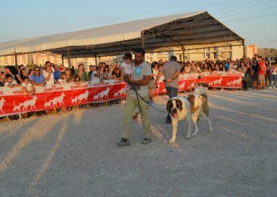 festival-canino-mascota-jardin-2016-569-1024x768